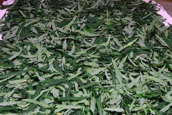 Подвяливание листьев