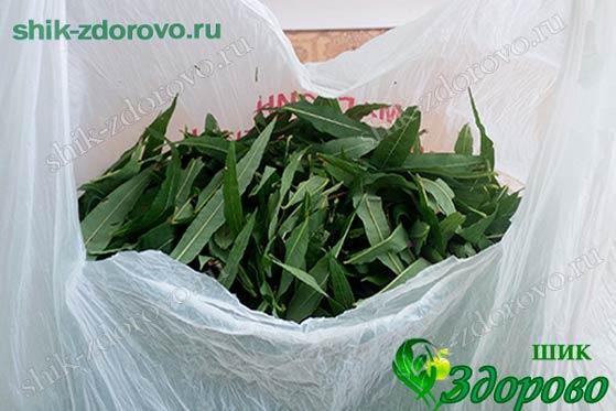 Как собирать листья кипрея