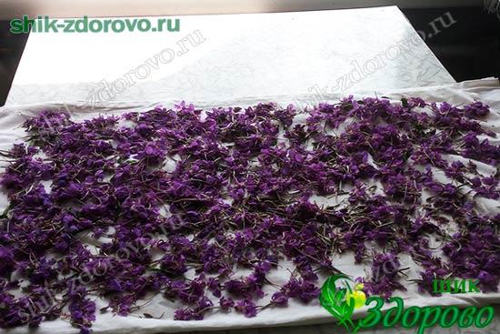 как сушить цветы иван-чая
